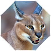 RainLab Cat-044 Caracal
